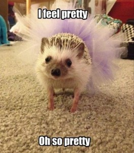 funny-hedgehog1